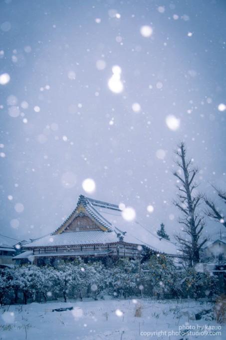 大雪スナップ