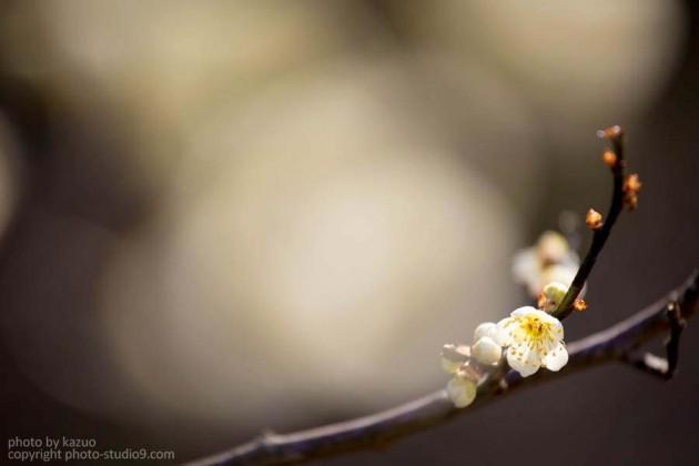 2014 京都御所の梅