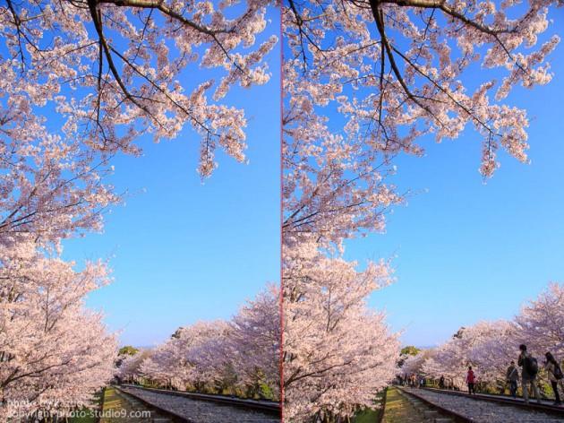 京都の桜 蹴上