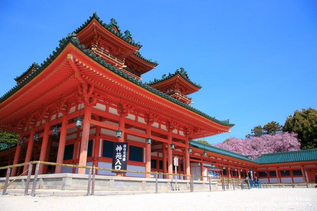 京都の桜 平安神宮