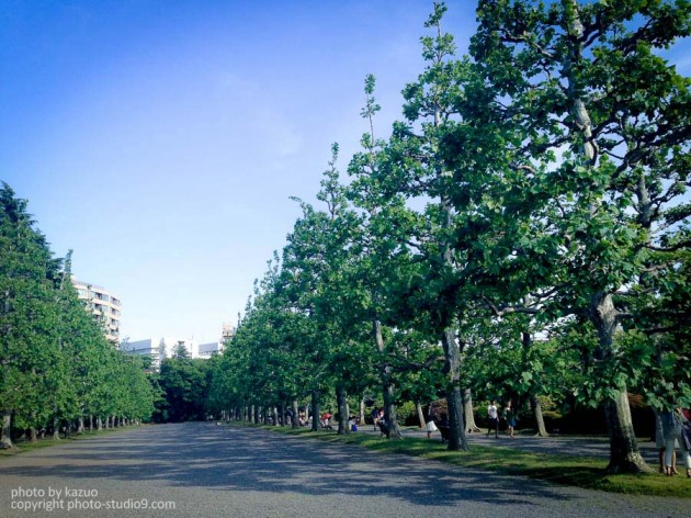 新宿御苑 iPhone