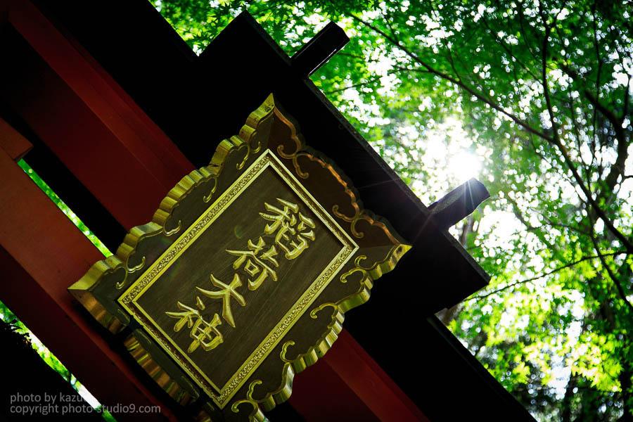 新緑の伏見稲荷と稲荷山と三室戸寺をスナップしてきた!