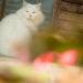 猫好きにはたまらない、京都 梅宮大社にいって色々スナップしてきた!